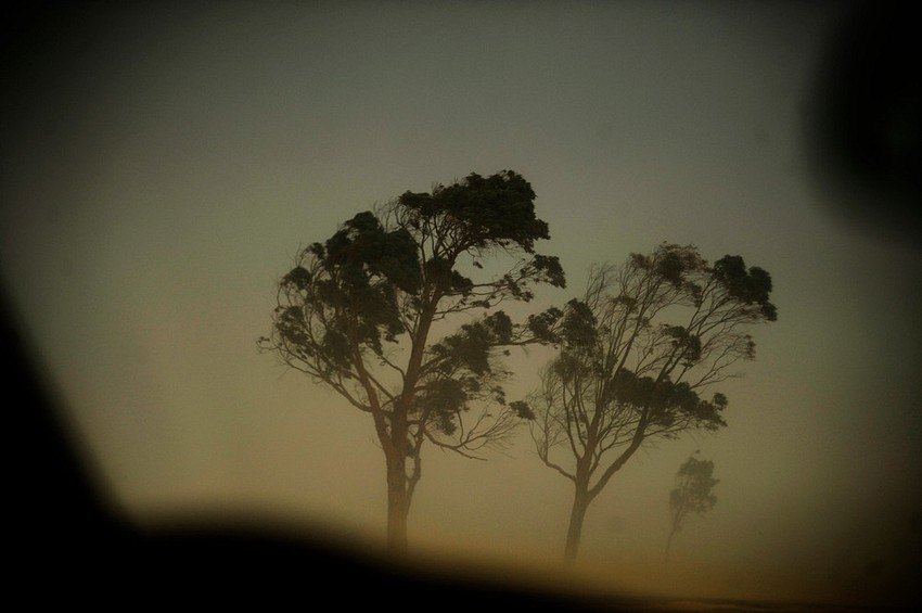 GUILLERMO CERVERA.Árboles en el desierto Libio.